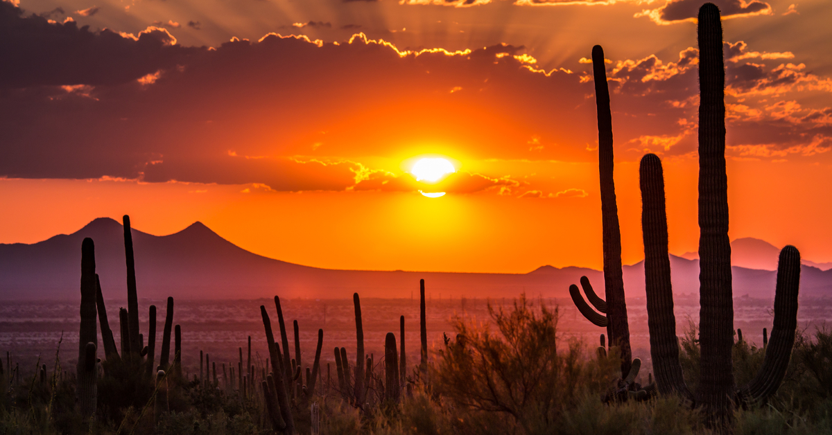 az sunset with cactus